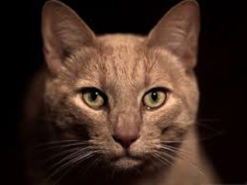 Comment utilisé un repulsif chat pour éloigner ce chat qui fait peur?