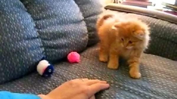 chaton-migno