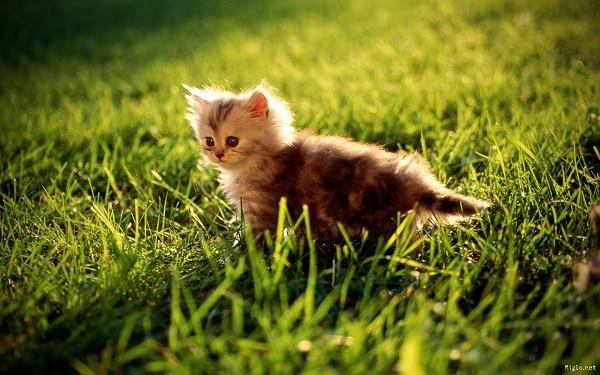 petit chat jardin