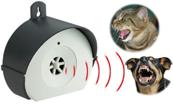 repulsif chat exterieur puissant
