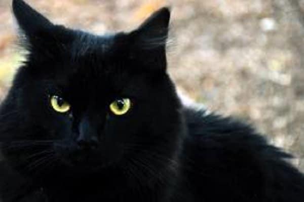 repulsif chat exterieur puissant pour éloigner un chat noir