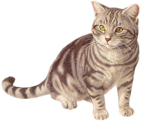 Dresser un chat: 10 choses à savoir pour dresser un chat