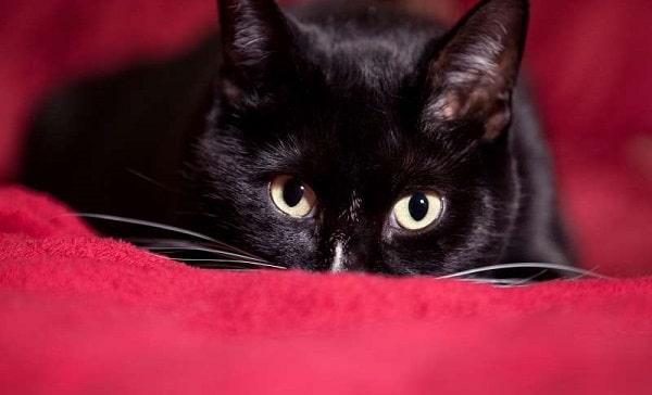 le ssscat répulsif chat intérieur efficace