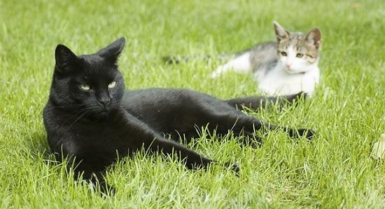 repousser les chats dans un jardin