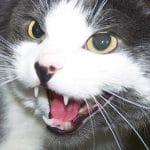 Test et Avis : Pack de 2 répulsifs chats Ultrason Pestbye