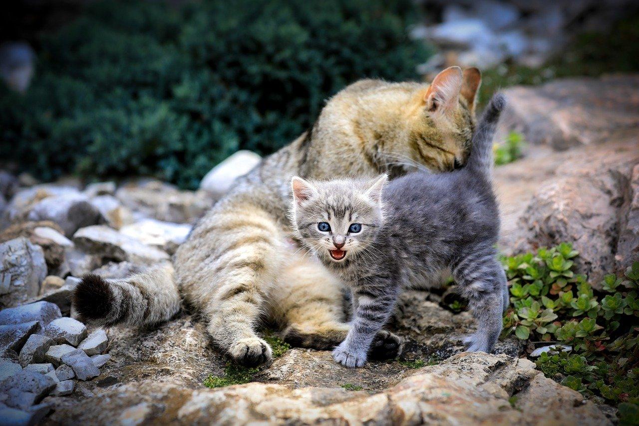 Répulsif chat huile essentielle